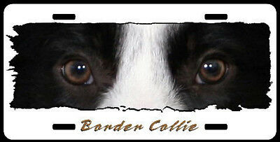 """Border Collie  on W """" The Eyes Have It """" License Plate"""