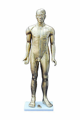 Acupuncture Model - Deluxe Male Copper Colour 84cm with English & Chinese Manual