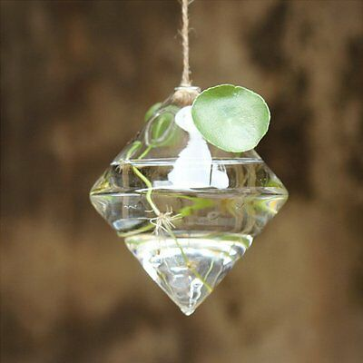 Home Garden Clear Glass Flower Hanging Vase Planter Terrarium Container New