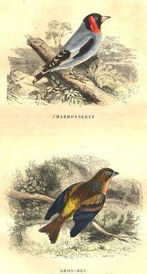 BIRDS. Order Passerines. Goldfinch, Hawfinch 1873 antique print picture