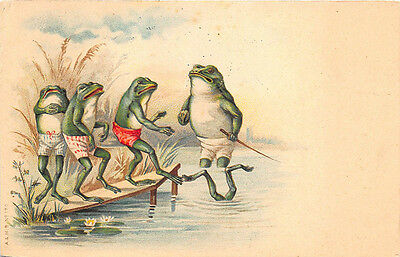 Five Frogs Following The Leader? 1907 Postcard