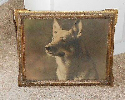 ANTIQUE PHOTGRAPH of GERMAN SHEPHERD DOG-PIECRUST STYLE FRAME.