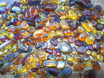 10 stones Natural Burmite Amber Insect 100 million years old (Untreated)