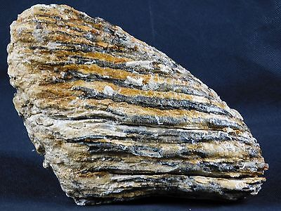 1) Very Large Woolly Mammoth TOOTH Partial Fossil UK - Great Unique Gift 2.15KG