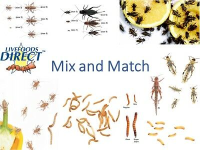 2 MAXIPACKS Mix 'n Match CRICKETS LOCUSTS MEALWORMS DUBIA ROACHES LIVE WAXWORMS