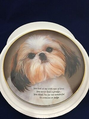 Cherished Shih Tzus EYES OF LOVE Plate Tzu Danbury Mint Never Hold A Grudge! Z3