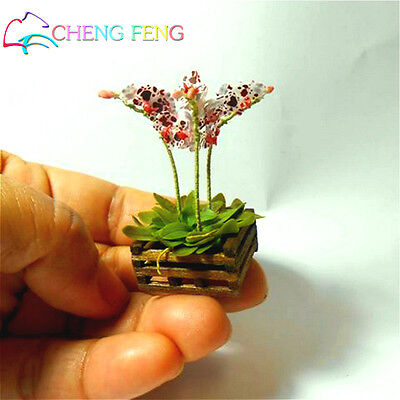 Mini Bonsai Orchid Seeds Flower Varieties Plants For Garden Decorat