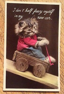 Vintage Postcard - Kitten Riding In A Car