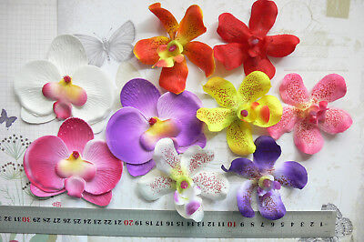 ORCHIDS Mixed Variety, Colours & Packs - 6.5 to 8 by 8 to 9.5cm across MultiList