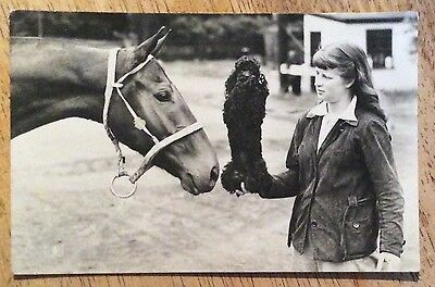 Vintage Horse Postcard - Girl With Poodle & Horse - Masons Alpha Series (1960's)