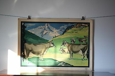 1950's California Dairy Industry Advisory Board Cow Poster Brown Swiss Vintage