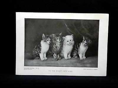 Small Antique Print Perry Pictures TO THE RIGHT INTO LINE by Lambert KITTENS