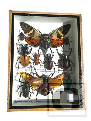 Real Butterfly Insect Bug Taxidermy Display Framed Box Small Set Gift gpasy 16