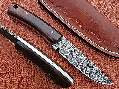 Custom Hand Made Damascus steel Hunting Mini Knife With Rose Wood Handle.