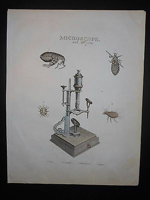 Microscope Engraving c1795 Hand Colored Medical Biology Insects