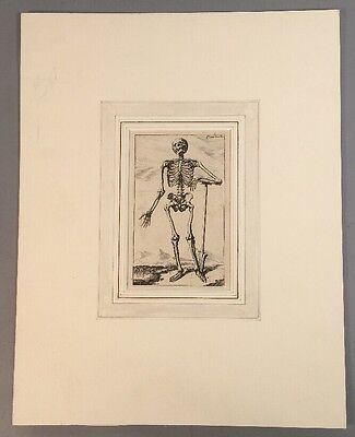 Vintage French Copper Engraving Skeleton With A Spade Drawing Anatomical