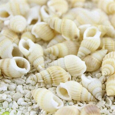 Pack 50 Natural Seashells Shells Mini Conch Beach Wedding Fish Tank Crafts Decor