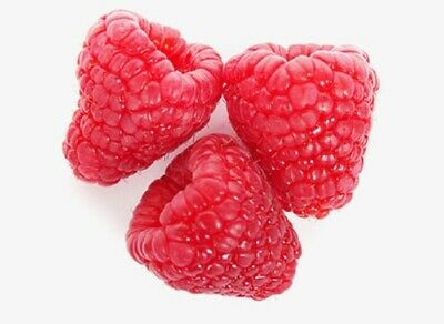 Sweet & Delicious Large Size Strawberry 50-Finest Seeds☆Four Season☆UK SELLER