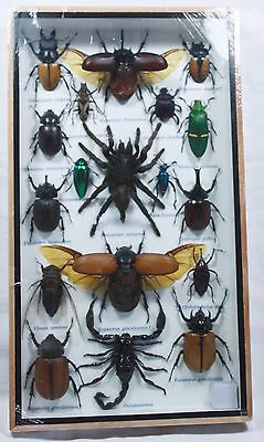 Real Rare Exotic Spider Scorpion Collection 18 Bug Insect Taxidermy Wood Frame
