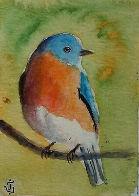 Hand Painted Original Watercolor ACEO EASTERN BLUEBIRD Wildlife Signed by JV
