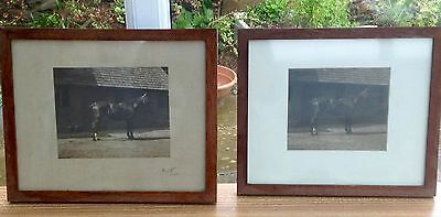 2 X Vintage Framed Photos Of Horses Appears To Be Same Photo One Signed