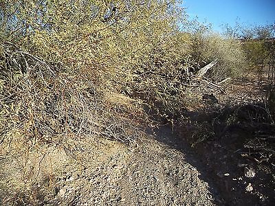 Gold Pan #1 - 20 Acre Placer Claim in the Belmont Mountains