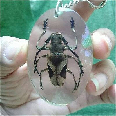 Beetle Bug Animal Stick Collection Key Chain Real Insect Clear Resin taxidermy