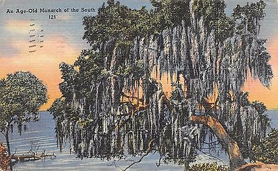 Postcard FL Age Old Monarch South Oaks Spanish Moss Vintage Florida Posted 1944