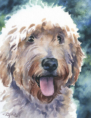 GOLDENDOODLE Watercolor DOG 8 x 10 ART Print Signed by Artist DJR