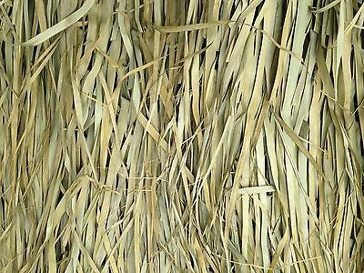 Tiki Palm Thatch Grass Bundle (5' H x 8' W - 2 sheets per bundle )