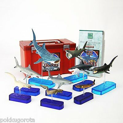 Colorata  3D SHARKS OF THE WORLD visual dictionary real figure Delux box Shark