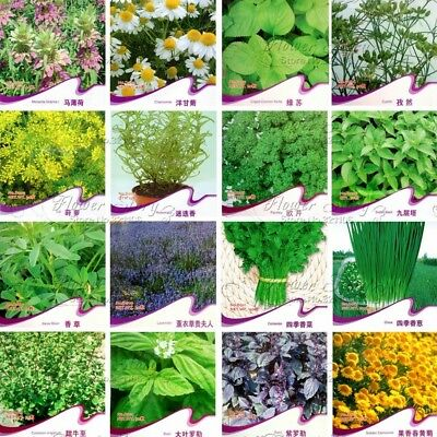 16 Sorts 740+ Herb Seeds Chamomile Cumin Dill Rosemary Parsley Lavender Coriande