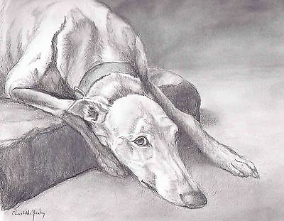 Greyhound Graphite Pencil Drawing Signed and Matted