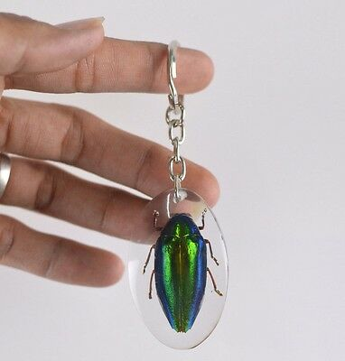 Bug Beetle Real Taxidermy Shape Key Ring Insect Wing Keychain Green Drop Glow ng