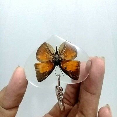 Real Butterfly Keyring Heart Accessories In Pendant Resin Insect Moth Key Chain