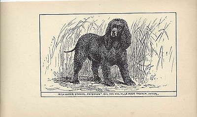 1900 UK Original Dog Art Pen & Ink Print RH Moore Champion IRISH WATER SPANIEL