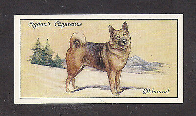 1936 UK Dog Art Full Body Portrait Ogden's Cigarette Card NORWEGIAN ELKHOUND