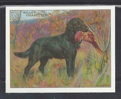 1914 Reissue UK Wardle Dog Art Study Wills Cigarette Card FLAT COATED RETRIEVER