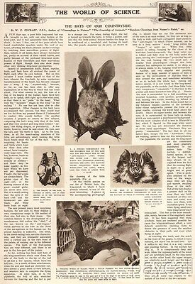1939 Print Article by W.P.Pycraft The Bats of our Countryside