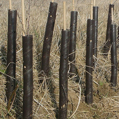 50 100 150 200 250 500 3Ft Heavy Duty Bamboo Canes + Brown Spiral Tree Guards