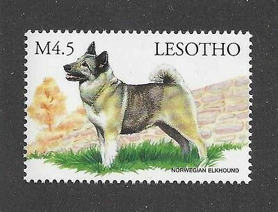 Dog Art Body Study Portrait Postage Stamp NORWEGIAN ELKHOUND Lesotho Africa MNH