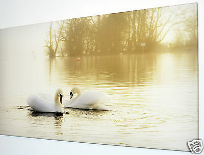 """Swans On Lake Canvas Wall Art Picture Large 18"""" X 32""""  Ready To Hang"""
