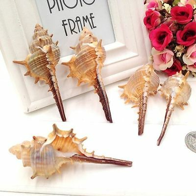 Natural Seashells 6-10cm Thorn Conch Shells Wedding Beach Crafts Decor 5pcs/lot