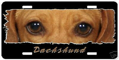 """Dachshund  """"The Eyes Have It"""" License Plate"""