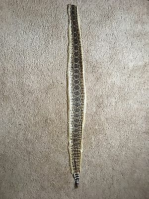 """Tanned rattlesnake skin craft taxidermy 33"""""""