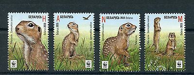 Belarus 2015 MNH Speckled Ground Squirrel WWF 4v Set Wild Animals Fauna Stamps