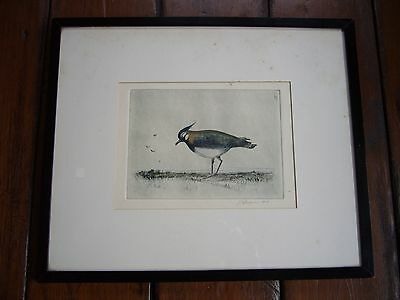 Vintage Pen And Ink Drawing Bird Lapwing By I G Brown 1946