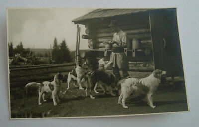 SHEPARD FEEDING SHEEP DOGS ~1915th ROMANIA MOLDAVIA MOUNTAINS PEASANT ETHNOGRAPH