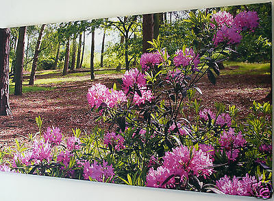 """Purple Woodland Flowers Canvas Wall Art Picture Large 18"""" X 32"""" Inch"""