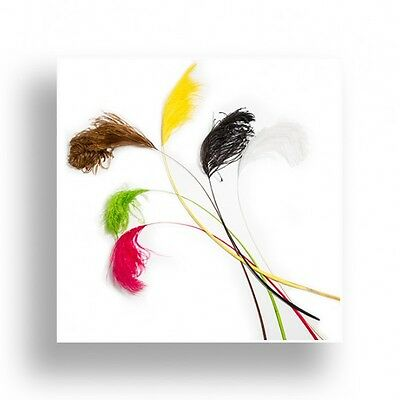 20 Dyed ostrich feather stem 50-70cm assorted colours for millinery and craft